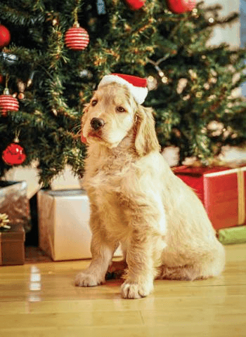 How to avoid 'pet accidents' this Holiday Season…